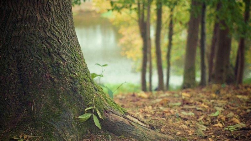2d madeiras do brasil - Manejo Florestal Sustentável